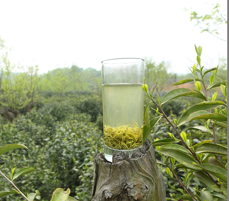 碧螺春红茶的制作图片